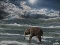 Der Elefant und das Meer