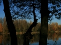 Herbstimpressionen_2012_Elbsee_Hilden_0014