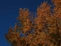 Herbstimpressionen_2012_Elbsee_Hilden_0069