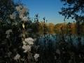Herbstimpressionen_Elbsee_Hilden_0054