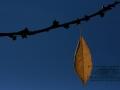 Herbst_14_11_2012_0001__045