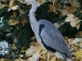 Herbstimpressionen_2012_Elbsee_Hilden_0074