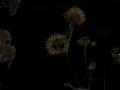 Herbstimpressionen_2012_Elbsee_Hilden_0077