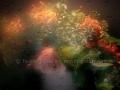 00202 Blumenstrauss Raindrops 003