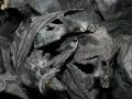 00524 Die Schlacht von Worringen Denkmal in Duesseldorf 0084