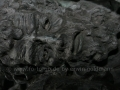 00525 Die Schlacht von Worringen Denkmal in Duesseldorf 0086