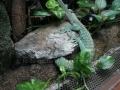 00391 Wuppertaler Zoo tiere 0004
