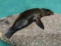 00393 Wuppertaler Zoo tiere 0006
