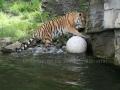 00407 Wuppertaler Zoo tiere 0019
