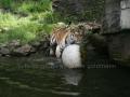 00412 Wuppertaler Zoo tiere 0024