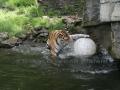 00414 Wuppertaler Zoo tiere 0026