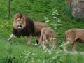 00422 Wuppertaler Zoo tiere 0034