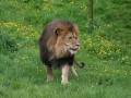00423 Wuppertaler Zoo tiere 0035