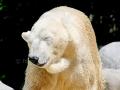 00388 Wuppertaler Zoo tiere 0001