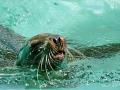 00392 Wuppertaler Zoo tiere 0005