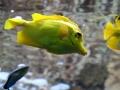 00396 Wuppertaler Zoo tiere 0009