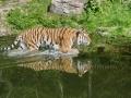 00405 Wuppertaler Zoo tiere 0017