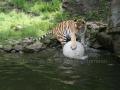 00408 Wuppertaler Zoo tiere 0020