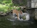 00413 Wuppertaler Zoo tiere 0025