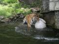00415 Wuppertaler Zoo tiere 0027