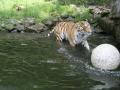 00416 Wuppertaler Zoo tiere 0028