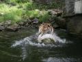 00417 Wuppertaler Zoo tiere 0029