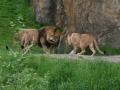 00421 Wuppertaler Zoo tiere 0033