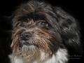 Herkules Hund von Heidi und Peterxxx.jpg
