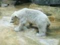 00390 Wuppertaler Zoo tiere 0003