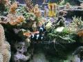 00402 Wuppertaler Zoo tiere 0014