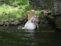 00411 Wuppertaler Zoo tiere 0023