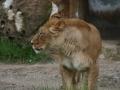 00424 Wuppertaler Zoo tiere 0036
