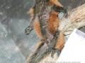 Lemur beim Sonnenbad