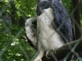 00451 Wuppertaler Zoo voegel 001