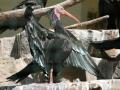 00458 Wuppertaler Zoo voegel 008