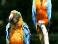 00460 Wuppertaler Zoo voegel 01
