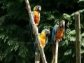 00462 Wuppertaler Zoo voegel 02